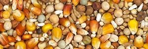 Scar Vanrobaeys N°1 Zucht Rote/Gelb Cribbs Maïs 25kg