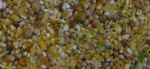 Scar Vital BIO Körnermischung Küken 25kg, DE-ÖKO-005